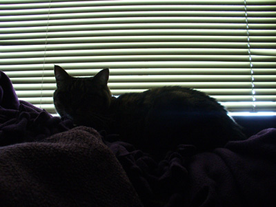 Maggie Silhouette by Laura Moncur 04-05-06